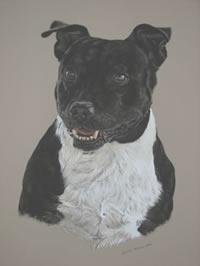 Portrait of Boof