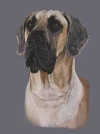 Portrait of Dooley