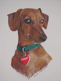 Portrait of Peanut