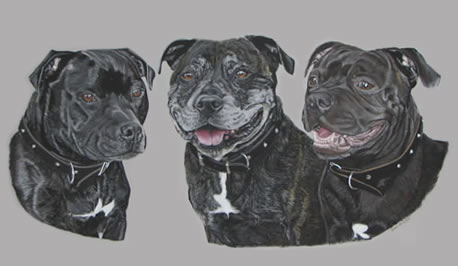 Portrait of Buster, Cocoa and Ievan